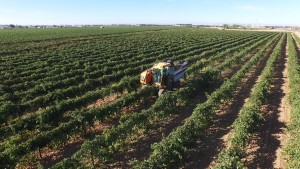 Spain white grape juice concentrate suppliers